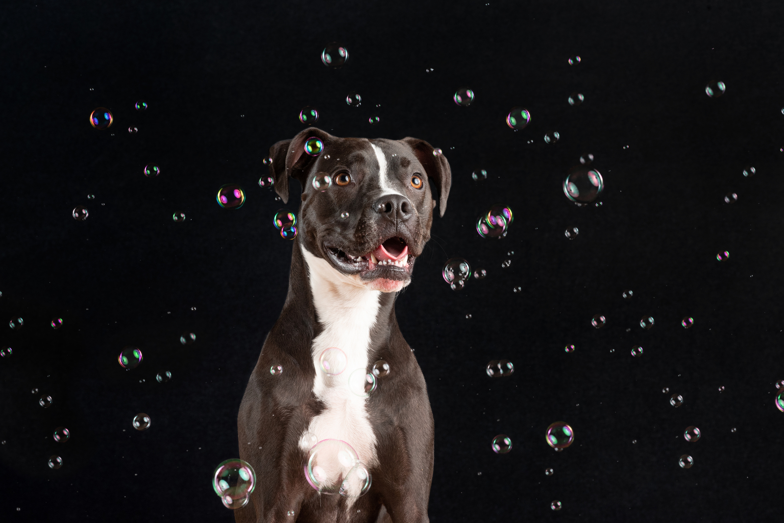 chicago dog photography by candice cusic