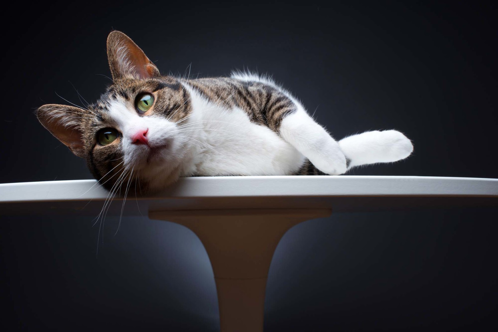 chicago cat photographer