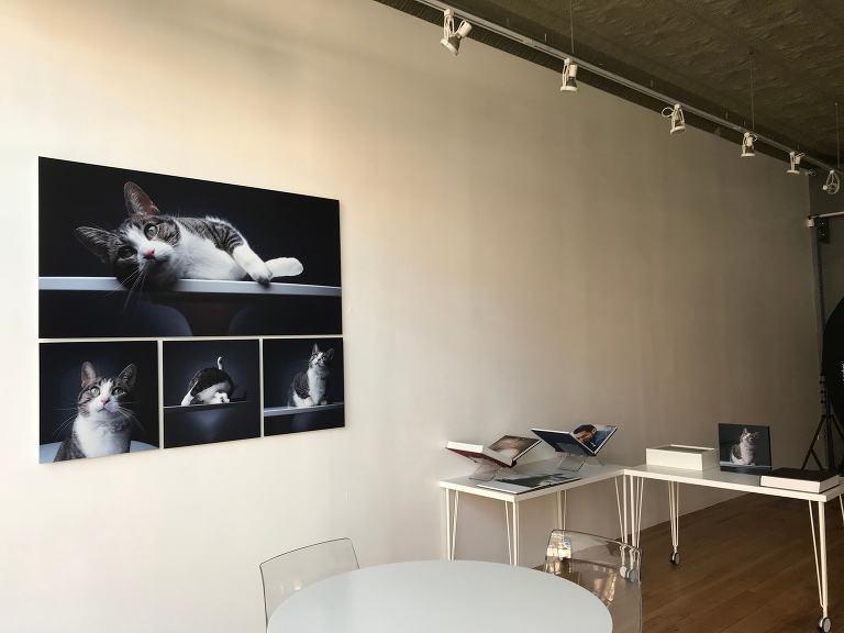 Chicago Photo Studio - Candice Cusic Photography 2