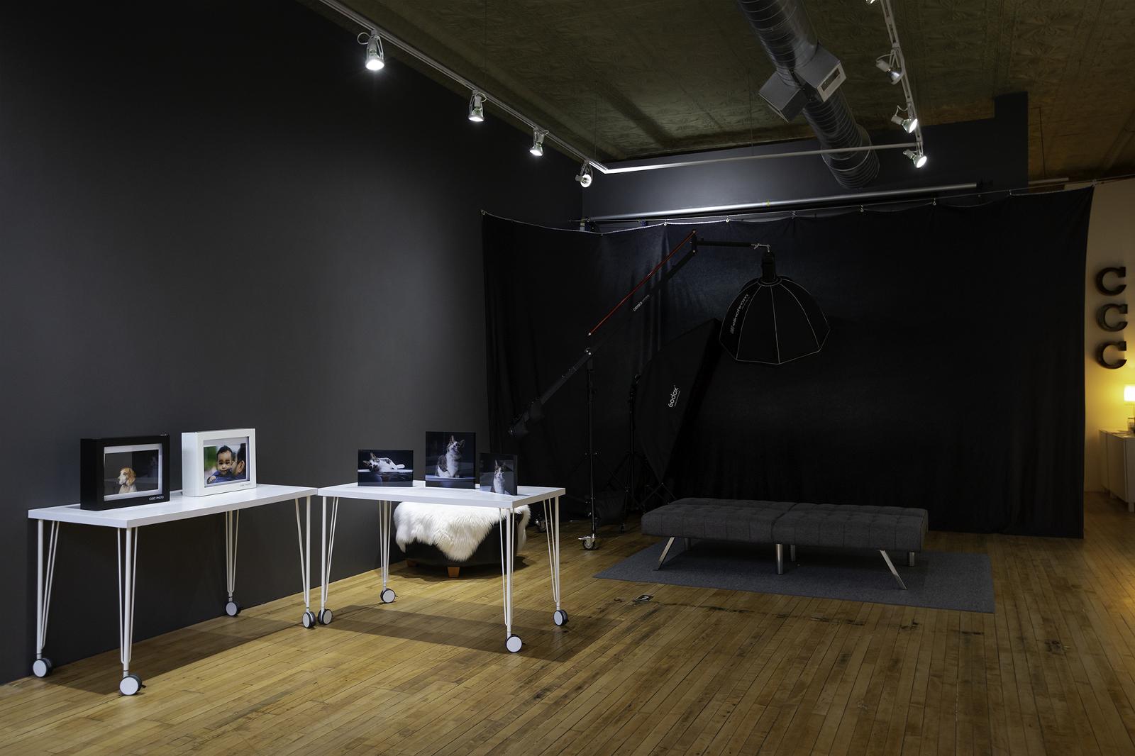 Chicago Pet Photography Studio