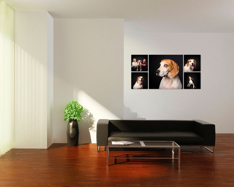 dog photography by candice cusic