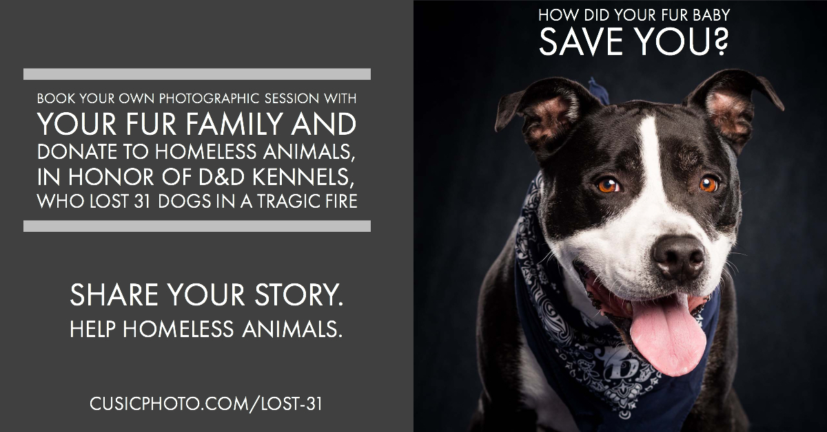 pit bull photography