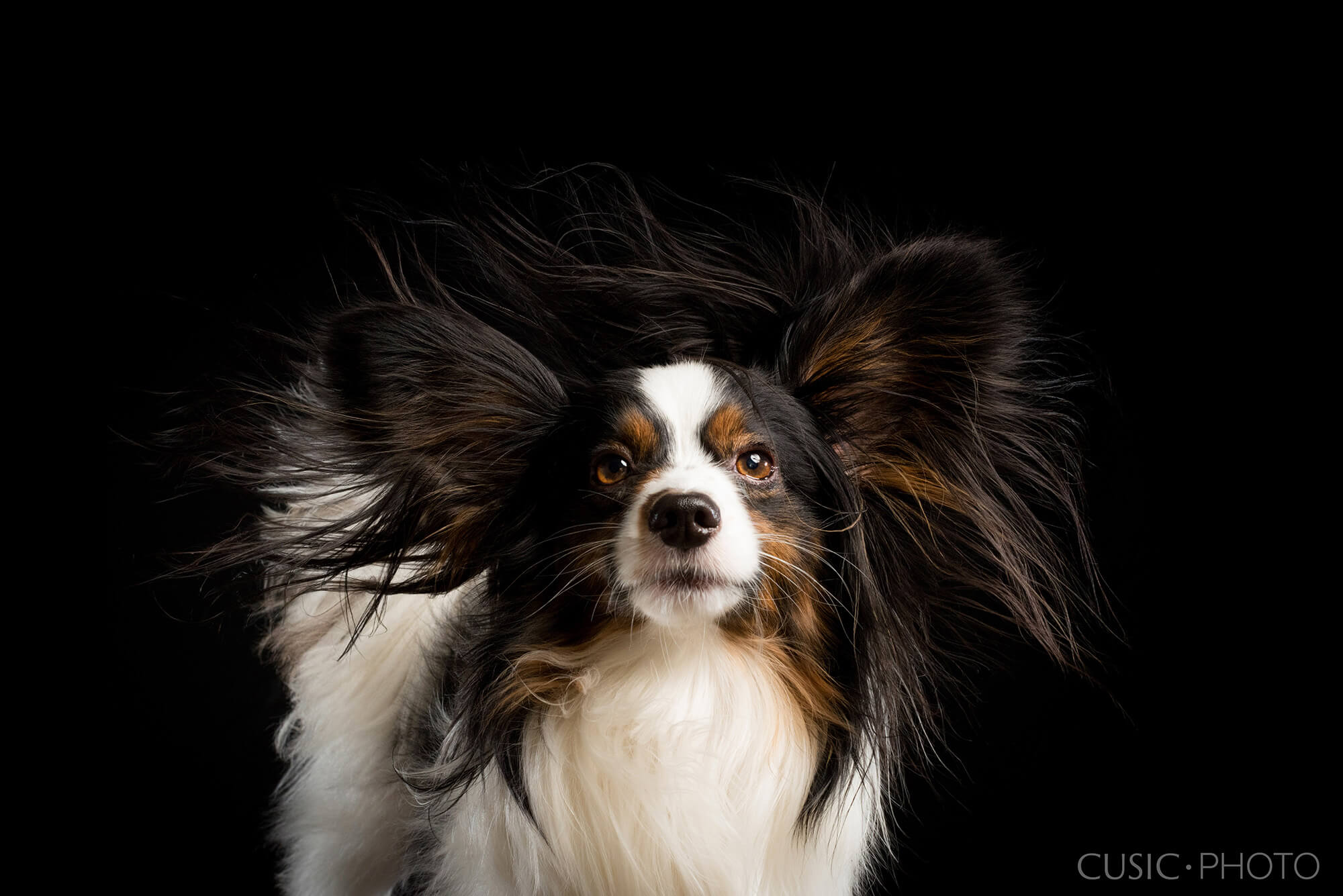 Windy Paws Chicago Dog Photography Studio Pet Photographer