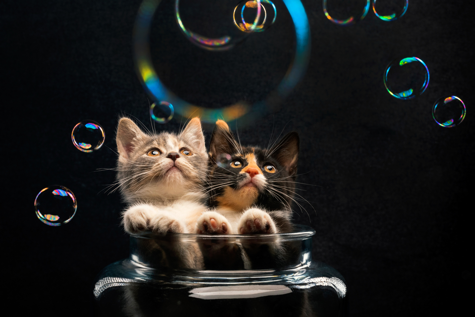 A pair of kittens attentively watch floating bubbles from a safe distance. Photographed by Candice Cusic
