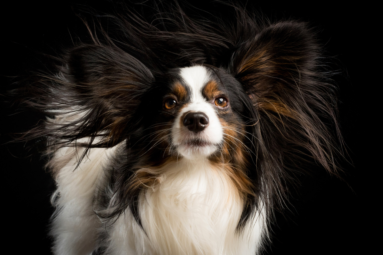 Dog Merlin getting a blowout during his photoshoot. Photographed by Candice Cusic